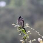 Watching the Birdwatcher
