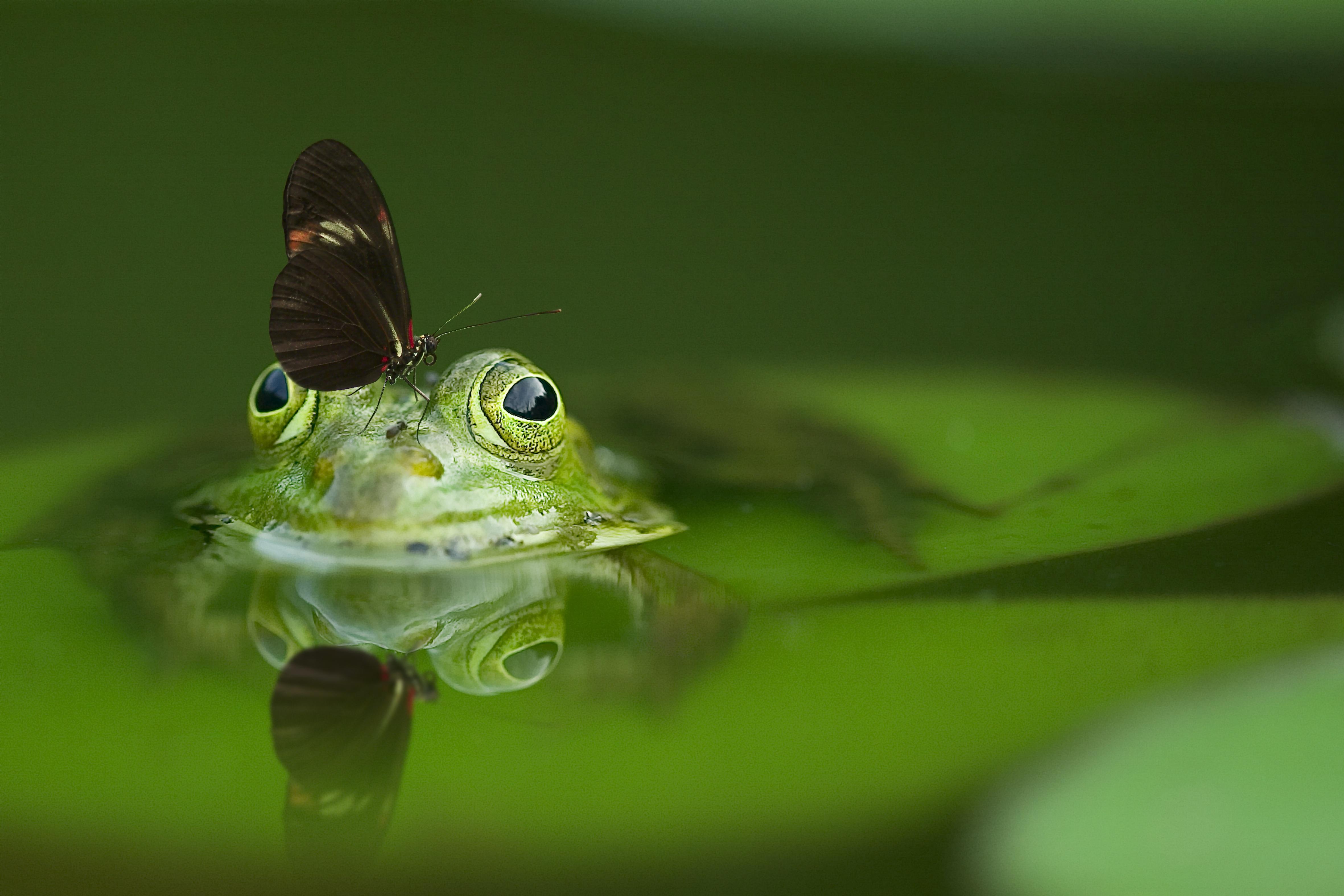frog chant gratefulness org