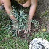 gardener tree
