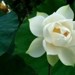 Sympathetic Joy: The Third Abode
