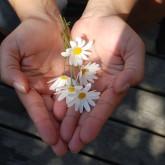 flower-hands-640