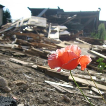 poppy, rubble