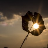 leaf, heart, sun, silhouette