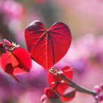 Books Related to Gratitude & Gratefulness