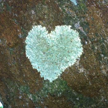 lichen-heart-LH