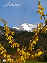 forsythia, mountains,