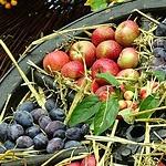 Fruit Displayed in Basket