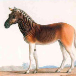 The Quagga and I