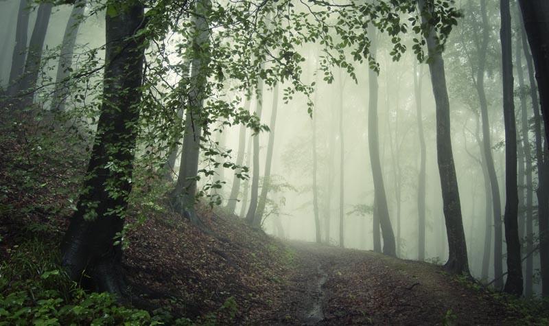Shutterstock - Lang Elliott