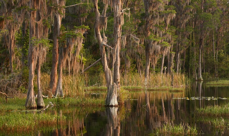 Southern Swamp - shutterstock