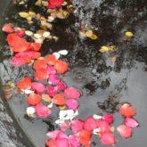 petals-499299_1280