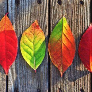 Make Gratitude A Center-Peace This Thanksgiving Season
