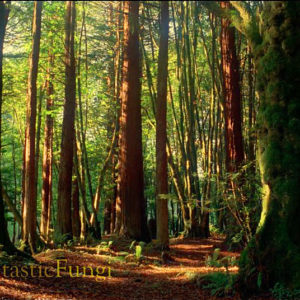 Mother Trees: Fantastic Fungi