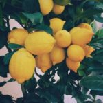 Ode to Lemons
