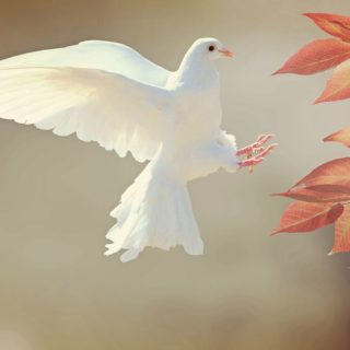 How Can Our Gratitude Contribute to World Peace?