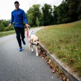 man in blue shirt walking with yellow lab guide dog