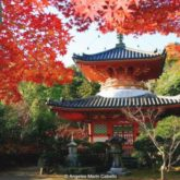 Japanese Pagoda with red fall leaves photo by - Angeles Marin
