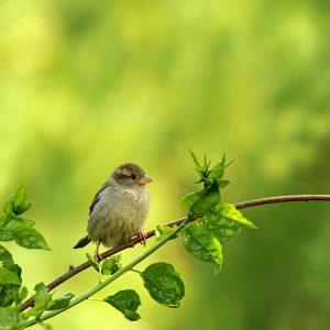 A Little Bird Told Me So