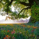 How Our Special Places Connect Us to Gratitude