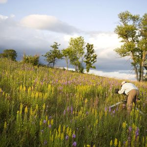 Grateful Changemakers: Nature 365